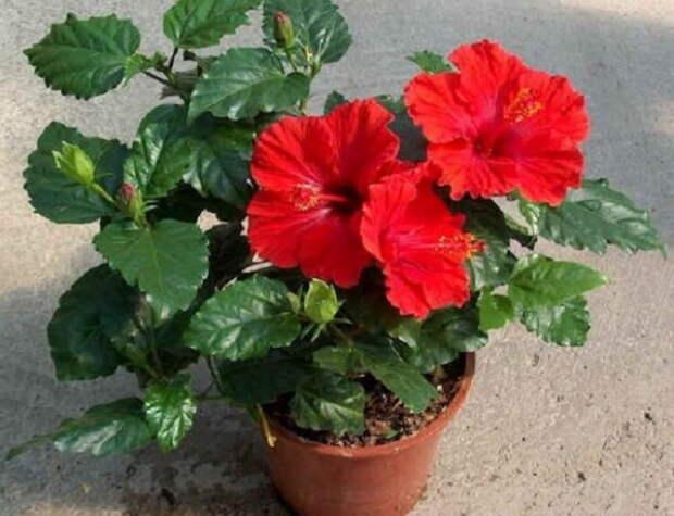 Вот какие цветы нужно завести, чтобы в дом пришло счастье