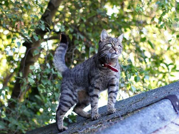 Узник замка Иф Истории про животных, забавное, кот