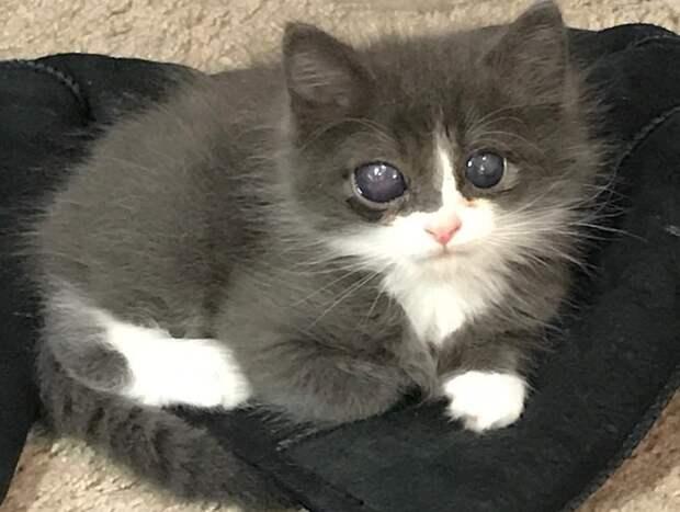 Котенок родился слепым, и шансов найти дом у него было мало. Но его фото в сети увидела добрая девушка