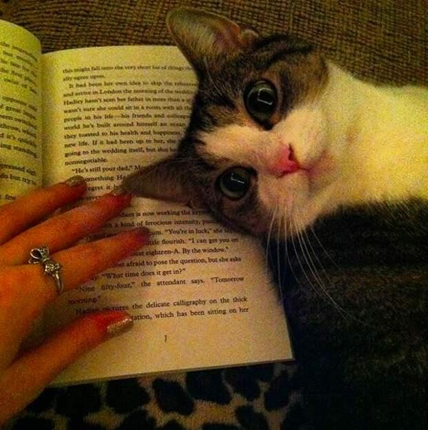 3. Для того, чтобы с таким милым видом развалиться прямо на книге нужны или годы тренировок, или врожденный талант домашний питомец, животные, коты, лежанка, милота