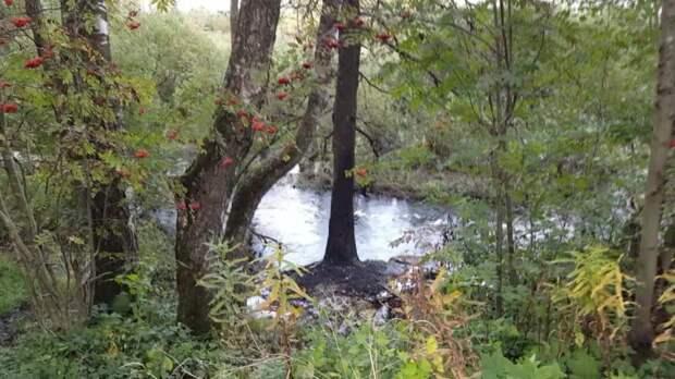 Грамоты против заповедника? Экологию Лахты-Ольгино может защитить статус природоохранной зоны