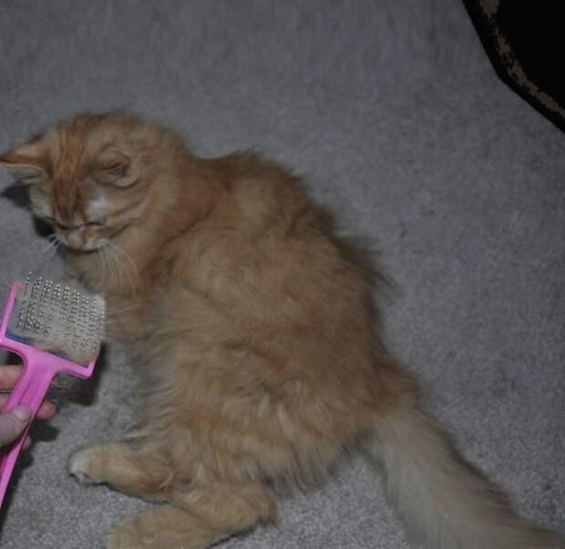 Кошачье рукоделие: из вычесанной шерсти кота сделали его мини-версию валяние, валяние из шерсти, животные, кот, коты, питомцы, своими руками, фото