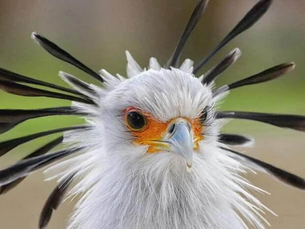 Птица секретарь: Одинокий рыцарь в змеином гнезде