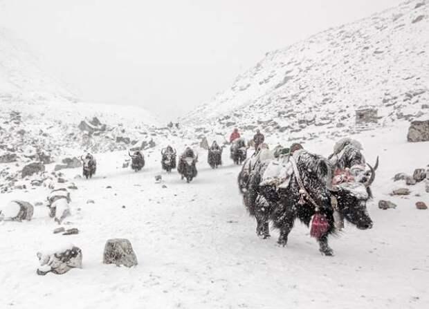 В Тибете тает вечная мерзлота