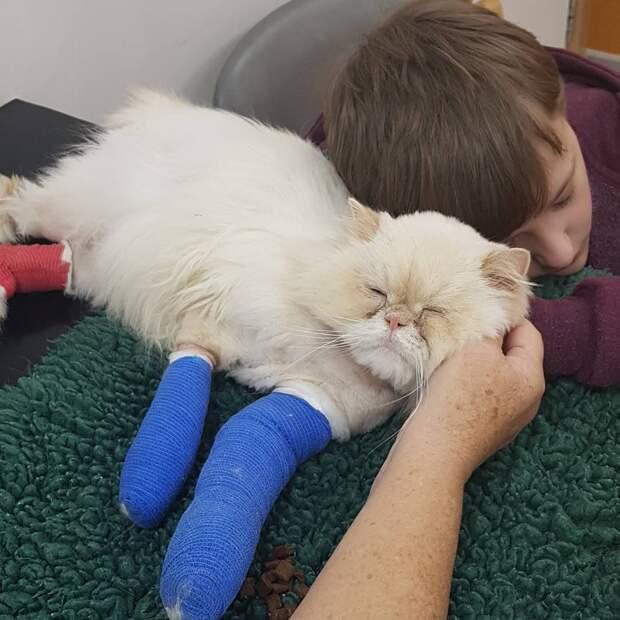 Кот, видя, что его мальчику плохо, собрал все свои силы и подполз к своему хозяину...