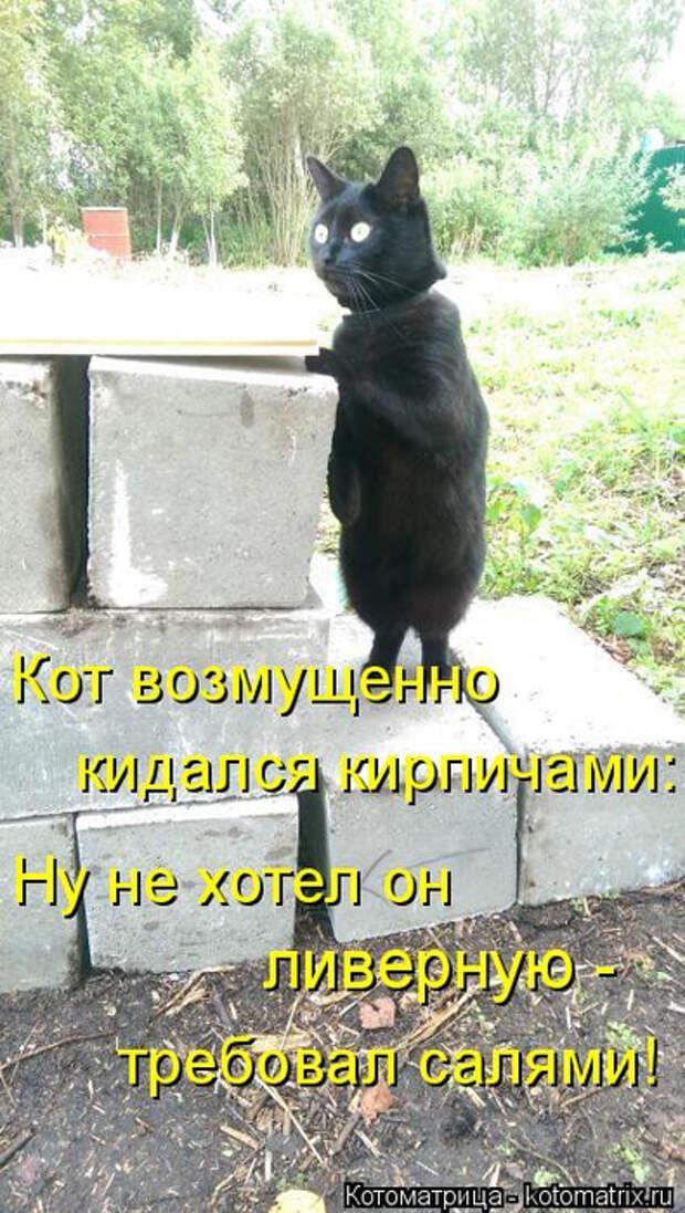 1586540410_kotomatrica-17 (395x700, 372Kb)