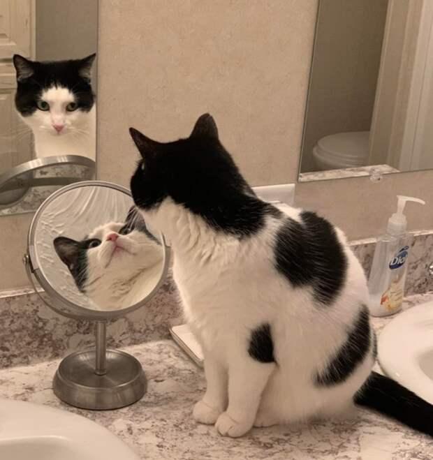 Найден кот Шрёдингера, который смотрит сразу в два зеркала