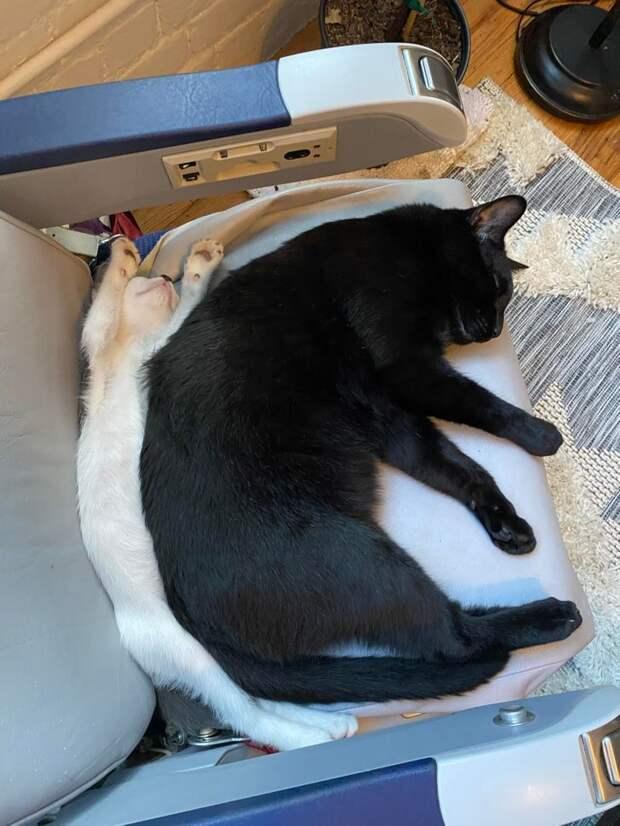 Чистая правда о том, что будет, если завести вторую кошку к первой.