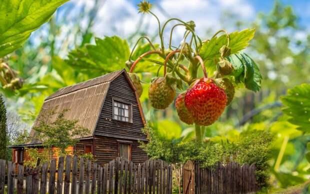 Законы и штрафы нового дачного сезона