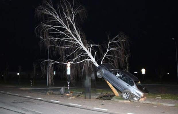 BMW «припарковали» ... на березе. И такое бывает!