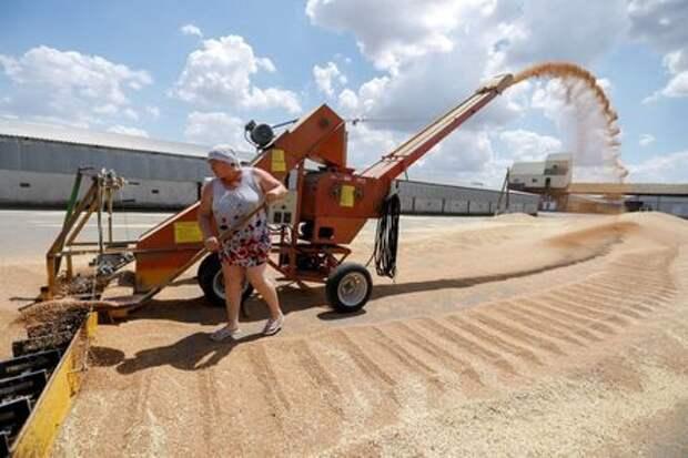 An employee loads wheat near a grain store in the settlement of Raduga in Stavropol Region, Russia June 30, 2021. REUTERS/Eduard Korniyenko