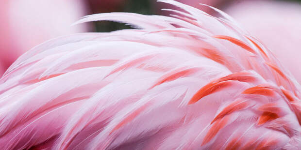 Эти потрясающие фламинго