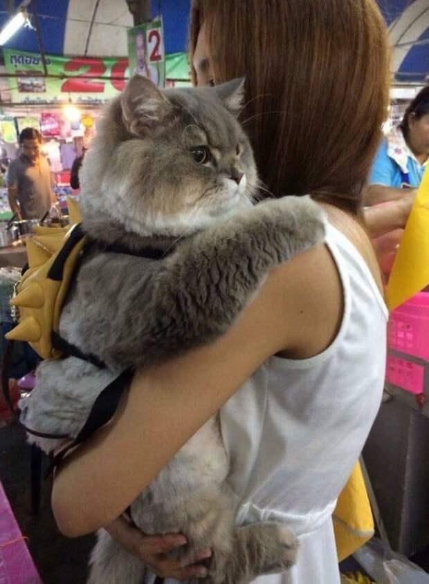 Кот-обниматель животные, кошки, фото