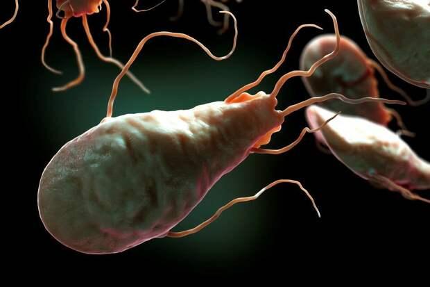 Лямблии: а ваша тонкая кишка свободна от паразитов?