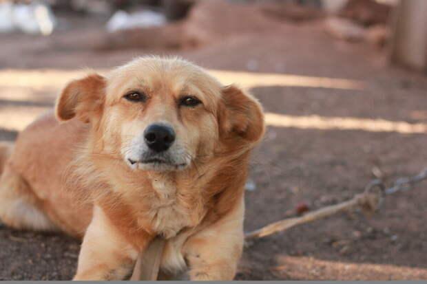 Бабушка приютила уличного щенка. А соседи стали с ней ругаться