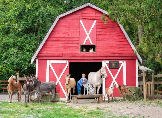 Жизнь фермеров в разных уголках планеты на фото