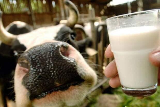 Захотелось парного молочка
