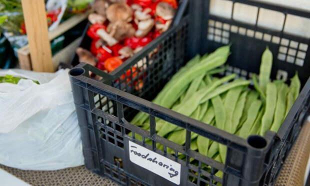 Как получить еду бесплатно или дешево