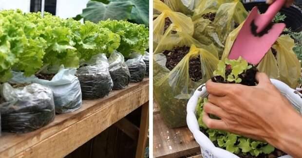 Много свежего салата: простейший способ в пакетах