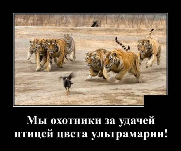 Демотиватор про тигров