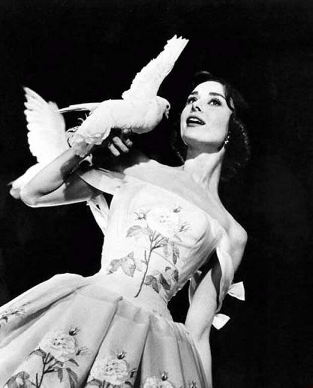 Одри Хепберн и птицы: голубь / Audrey Hepburn and birds: pigeon. Photo