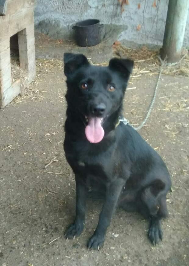 Теперь Булат выглядит счастливым и здоровым псом Фото: приют «4 лапы»