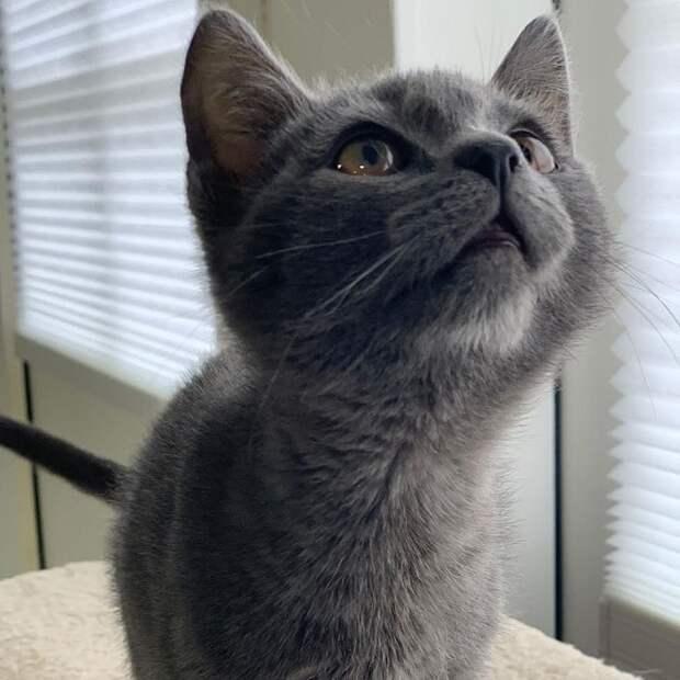 Котенок смотрит вверх