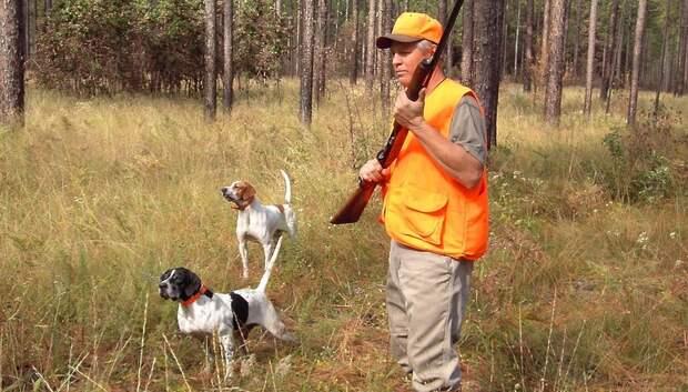 Срок получения разрешения на охоту установили в Подмосковье