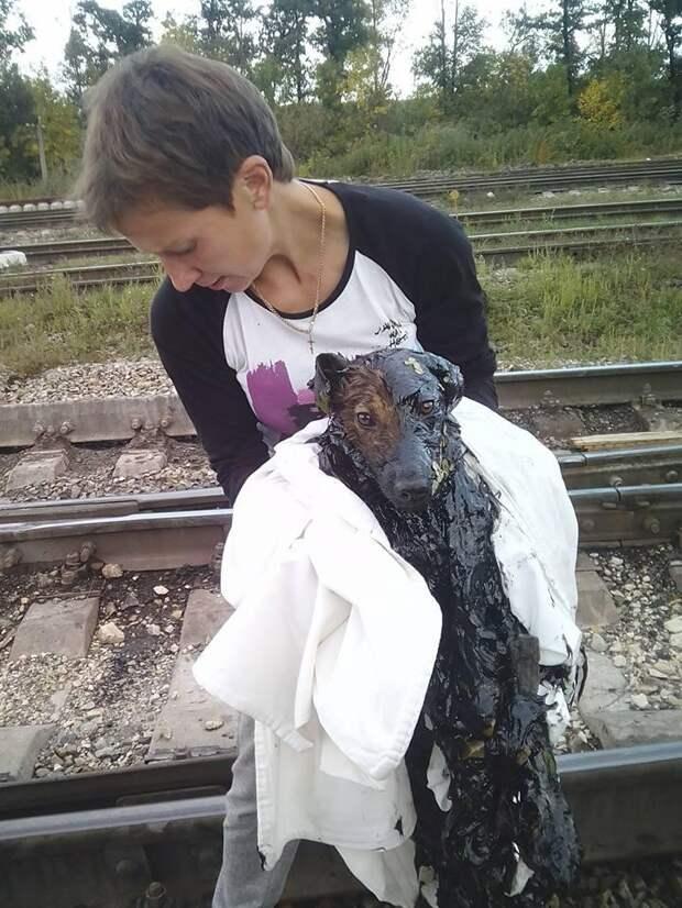 Собачка тонула в липкой смоле. Она отчаянно сражалась за жизнь, но сил оставалось всё меньше…
