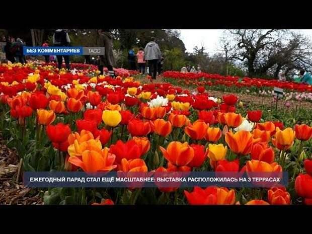 В Никитском ботаническом саду стартовал парад тюльпанов