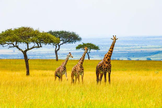 Следующая остановка --Африка