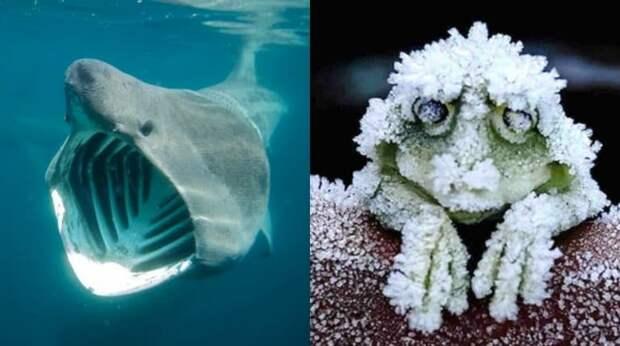 Животные, какими ты их не знал: 9 удивительных фактов, о которых нам не говорили