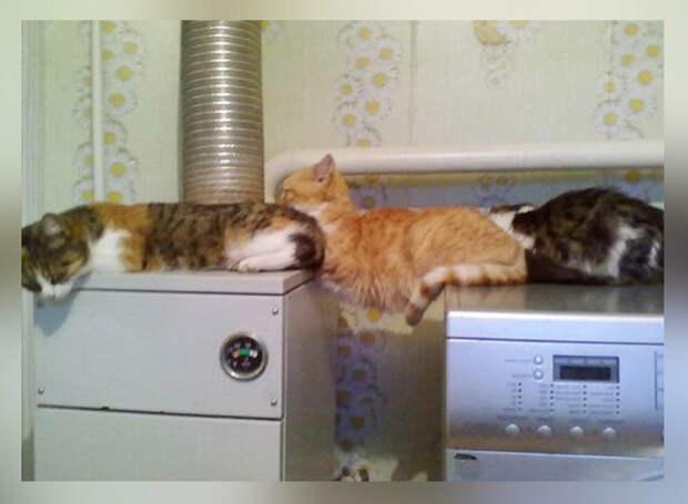 10 фото-доказательств того, что коты не дружат с логикой