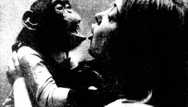 Трагическая судьба Нима Чимпского, или Можно ли из обезьяны сделать человека