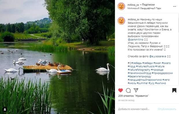 Лебедям в Ландшафтном парке дали имена