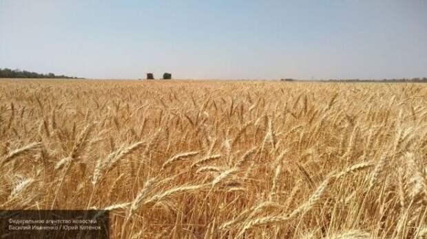 Россия может стать лидером по экспорту пшеницы на фоне засухи в Европе
