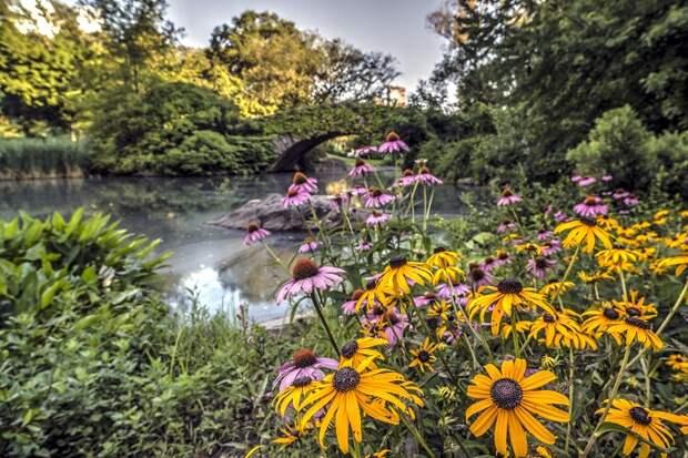 неприхотливые ампельные садовые цветы