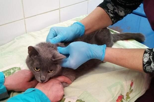 Сторожевые псы приютили и кормили в своей будке беременную кошку, тем самым спасли ее от голода