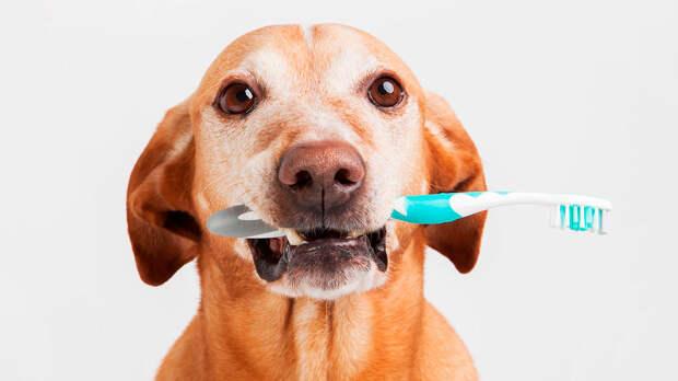 Почему у собаки пахнет изо рта и что с этим делать