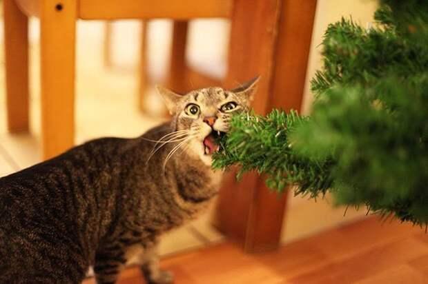 12. Вкусно! животные, новый год, праздник к нам приходит, разрушительная сила, рождество, собаки и кошки, юмор