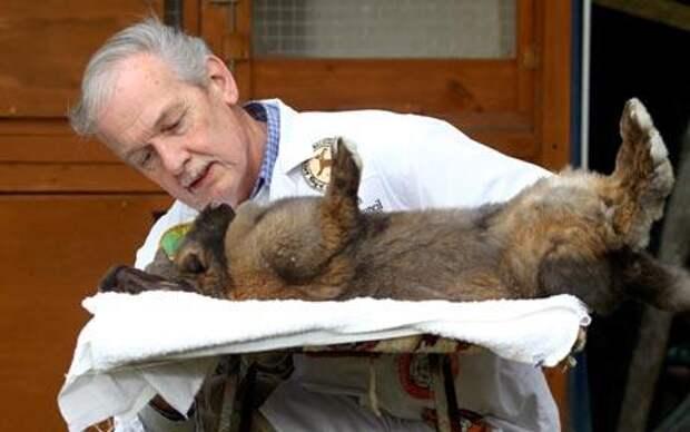 Гипноз кошек и животных