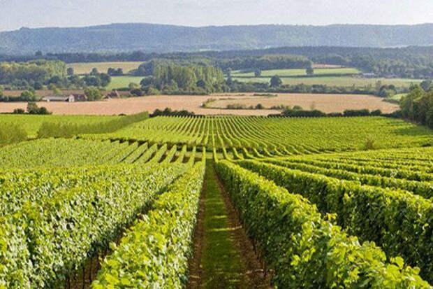 10 стран, где производят вкусное вино