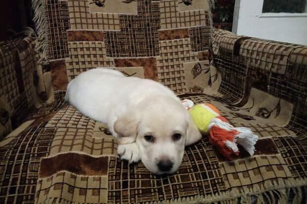 Месячного щенка принесли в дом семьи Бобок клинцовские власти. Фото: семейный архив.