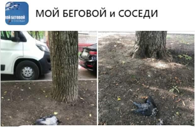 В Беговом массово гибнут птицы