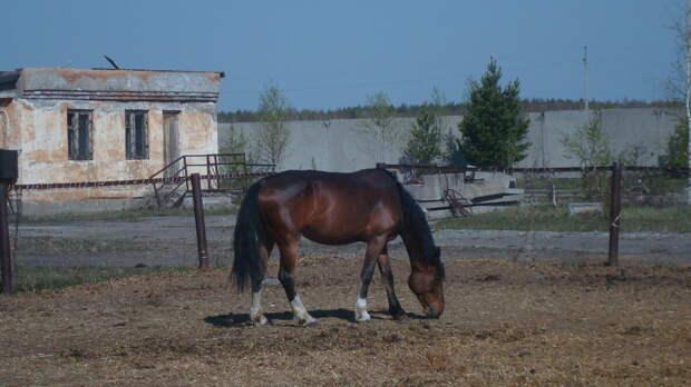 10 интересных фактов о лошадях...