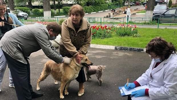 Бесплатную вакцинацию домашних животных проводят в микрорайоне Дубровицы