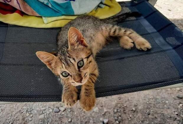 Бездомный котенок неожиданно стал компаньоном по путешествию для семейной пары