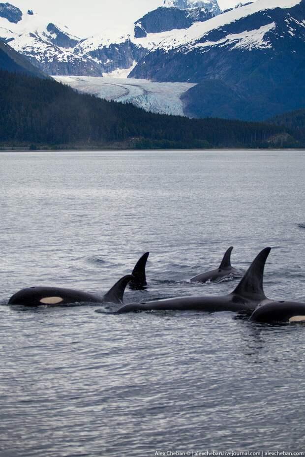 Alaska29 Такая впечатляющая Аляска