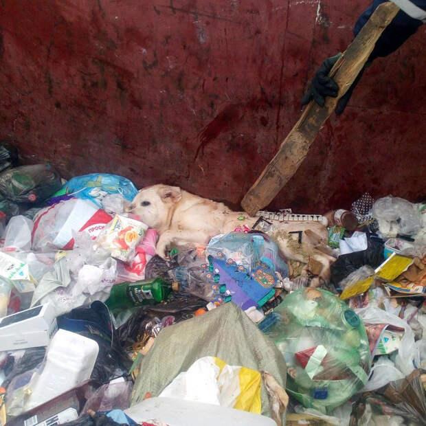 Полиция не увидела злого умысла в действиях хозяина, который покалечил и выбросил на помойку своего пса!