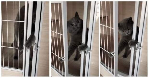 Свобода была так близка! Неудачный побег кота из клетки видео, животные, китай, клетка, кот, побег, прикол